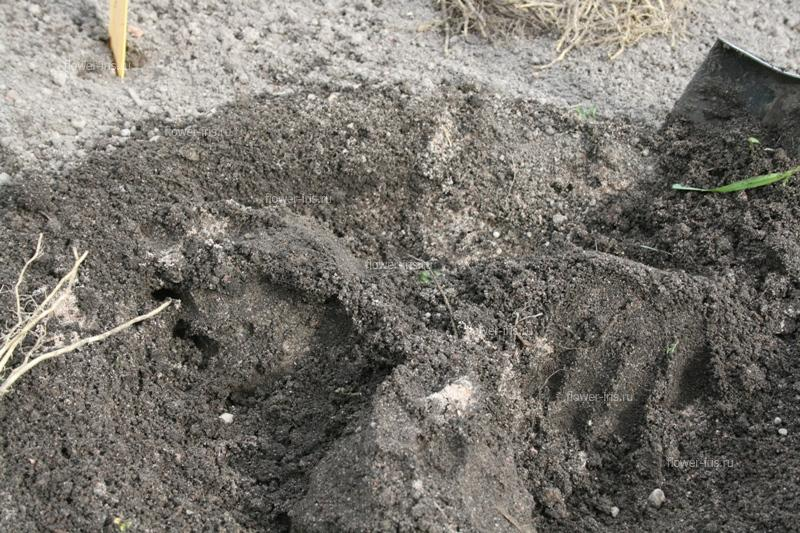 Build up a small mounds of soil