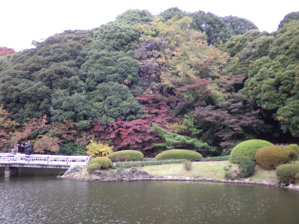 Fragment of the Japanese garden